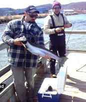 Lake Superior Steelhead-  Fishing from the Anna River Pier, Munising, Michigan